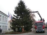 26. listopadu 2011 - stavění vánočního smrku_7