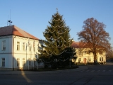 26. listopadu 2011 - stavění vánočního smrku_9