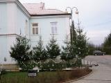 Vánoční strom 2013_4