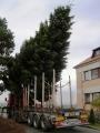 Vánoční strom 2012_10