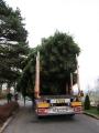 Vánoční strom 2012_11