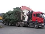 Vánoční strom 2012_13
