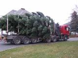Vánoční strom 2012_14