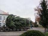 Vánoční strom 2012_15