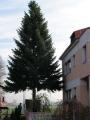 Vánoční strom 2012_1