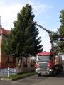 Vánoční strom 2012_3