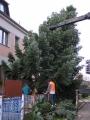 Vánoční strom 2012_7
