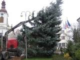 Vánoční strom_14
