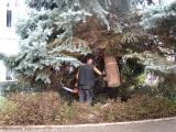 Vánoční strom_16
