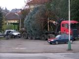 Vánoční strom_1