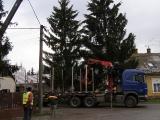 Vánoční strom_11
