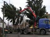 Vánoční strom_12