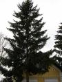 Vánoční strom_3