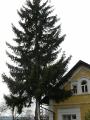 Vánoční strom_6