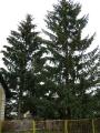 Vánoční strom_9